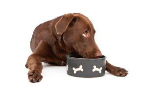 דגשים לתזונת כלבים גדולים וענקיים