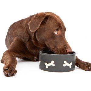 מזון רפואי לכלבים