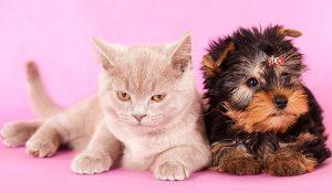 חנות חיות עם שירות וטרינרי