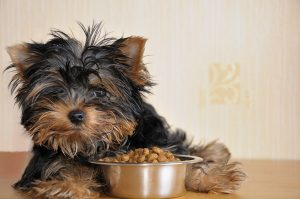 מזון מומלץ לגורי כלבים
