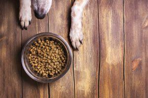 מזון לכלבים רמת גן