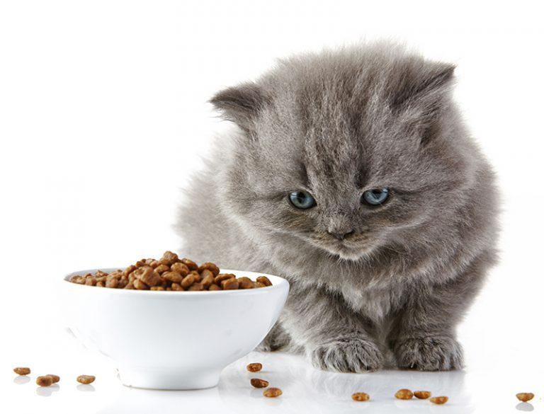 מזון חתולים בגבעתיים
