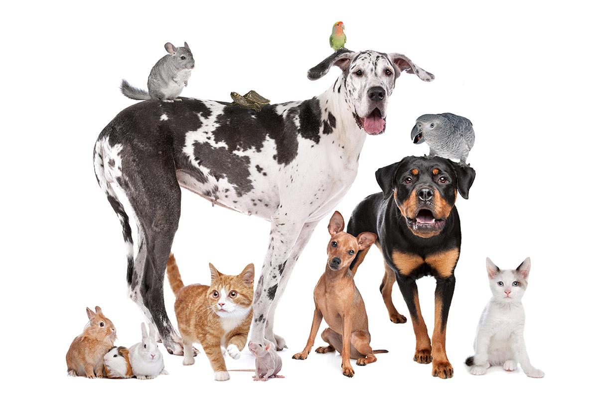 חי בר – חנות חיות הכי טובה ברמת גן