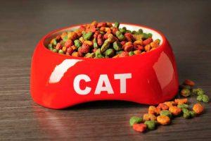 מזון לחתולים רויאל