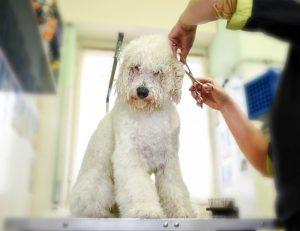 מספרה לכלבים מקצועית  בגבעתיים