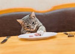 מזון לחתולים ברחובות