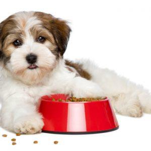 שימורי מזון רפואי לכלבים