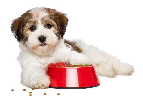מזון לכלבים ברחובות