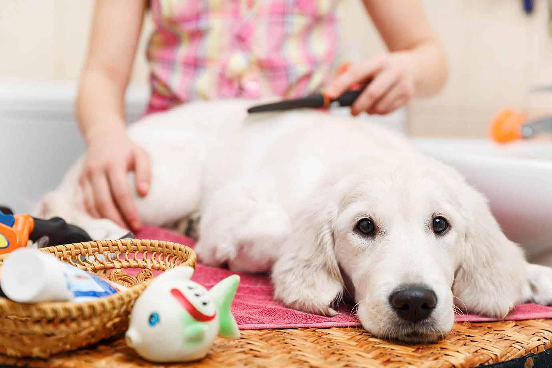 חנות חיות איכותית לחובבי בעלי חיים
