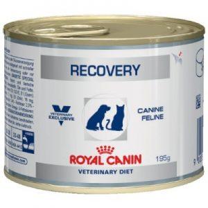 רויאל קנין ריקוברי – שימורי מזון רפואי לכלבים