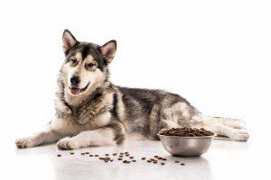 חשיבות עיקור וסירוס כלבים וחתולים