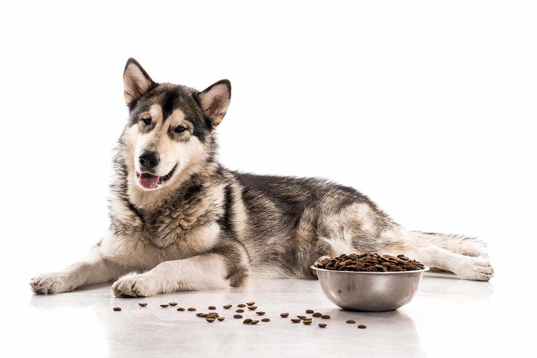 מזון כלבים בריא ועסיסי ברחובות