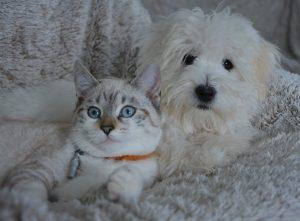 הכל לכלב ולחתול