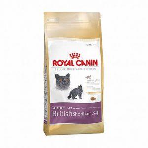 """מזון רויאל קנין לחתול בריטי קצר שיער 4 ק""""ג"""