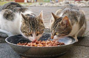 איך לבחור אוכל לחתולים