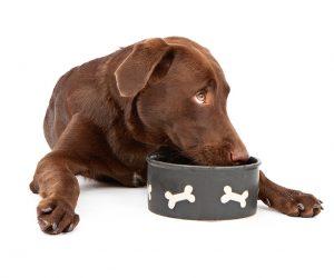 כמה אוכל צריך לתת לכלב?