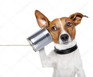 depositphotos_11398028-stock-photo-dog-on-the-phone