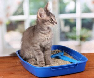 depositphotos_12393245-stock-photo-small-gray-kitten-in-blue