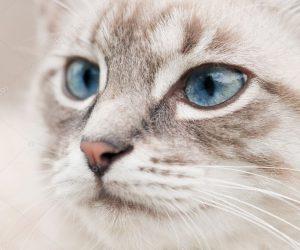 depositphotos_6716315-stock-photo-cat-head