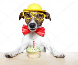 depositphotos_8752338-stock-photo-dog-with-cupcake