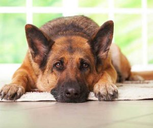 מזון רפואי לכלבים וחתולים ברמת גן